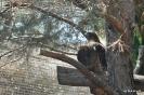 Águila - Animal Fauna Salvaje