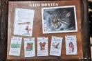 Gato Montés Felis Silvestris
