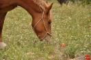 Caballo comiendo en campo_10