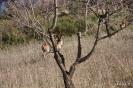 5- Cabras en el monte
