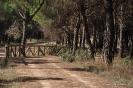 Cañada Real