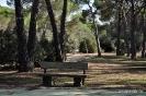Pajaje San Isidro