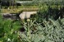 Alcachofas en Botánico de Madrid