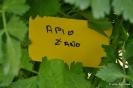 Apio_1