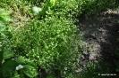 Canónigo Verde de Cambrai_3