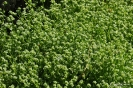 Canónigo Verde de Cambrai_5