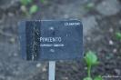 Pimiento_1