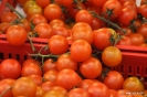 Tomates recolectados