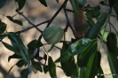 Almendros en Botánico de Madrid