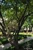 Granado en Jardín Botánico