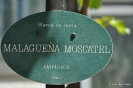 Malagueña Moscatel_1