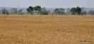 Campo de trigo_2