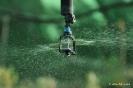 Fitotecnia Técnicas de cultivo