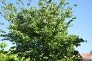 Árbol del amor_1
