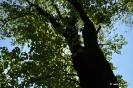 Árbol del amor_7