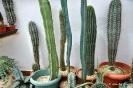 Cactus en Honrubia_11