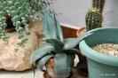 Cactus en Honrubia_12