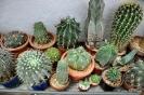 Cactus en Honrubia_14