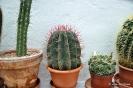 Cactus en Honrubia_15