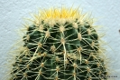 Cactus Honrubia