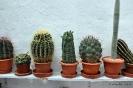 Cactus en Honrubia_1