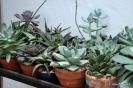 Cactus en Honrubia_21