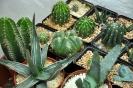 Cactus en Honrubia_22