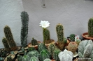 Cactus en Honrubia_23