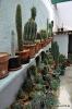 Cactus en Honrubia_24