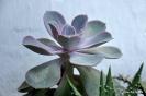 Cactus en Honrubia_27