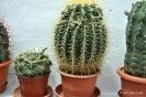 Cactus en Honrubia_2