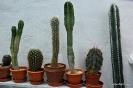 Cactus en Honrubia_3