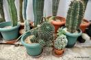 Cactus en Honrubia_6