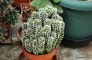 Cactus en Honrubia_7