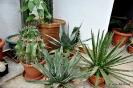 Cactus en Honrubia_9