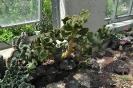 Cactus Interior