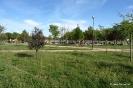 Parque de La Pulgosa_1