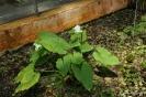 Plantas Acuáticas_4