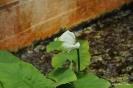 Plantas Acuáticas_5