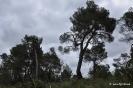 Pinares - Pinos