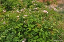 Plantas y Arbustos de montes sin nombres