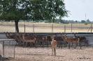 Ciervos en Albacete