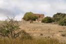 Casas de D. Pedro a Higueruela
