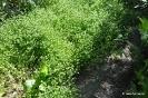 Canónigo Verde de Cambrai_4