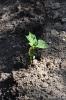 Cultivos de Horticultura