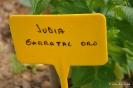 Judías_9