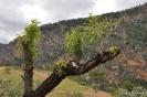 Almendros en ruta de senderismo Ayna Bogarra