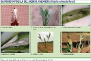 Glifodes del Olivo 2