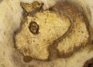 Hongos de la madera - 1