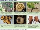 Hongos de la madera - 2